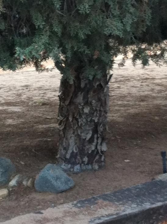 Tree-Smiley