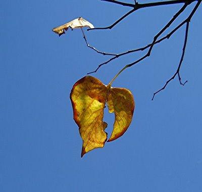 lost-love-last-leaf