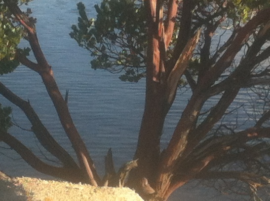 silverwood-Lake-Jan-2014-6