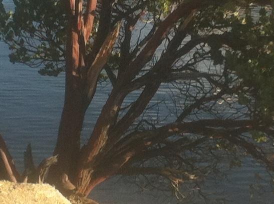 silverwood-Lake-ca-Jan-2014-7