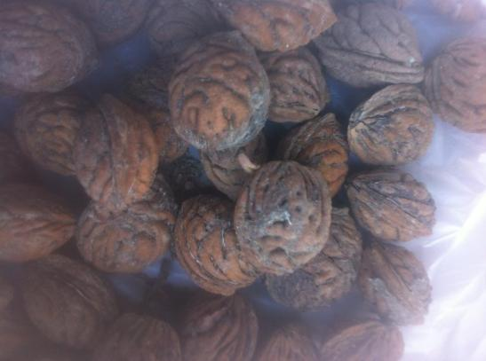 apricot-kernels-cancer-b17-laetrile