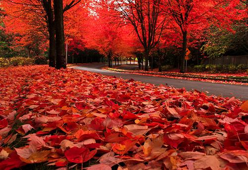 autumn leaves oregon