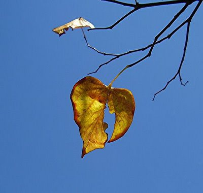 broken-heart-leaf1