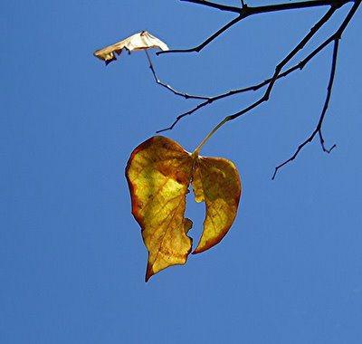 broken-heart-leaf1