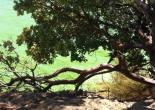 silverwood-lake-cheri-roberts