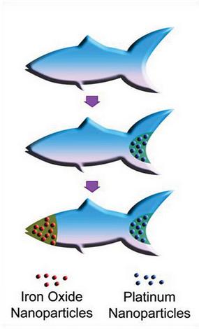 microfish-nanobots-uc-san-diego-toxins-bloodstream
